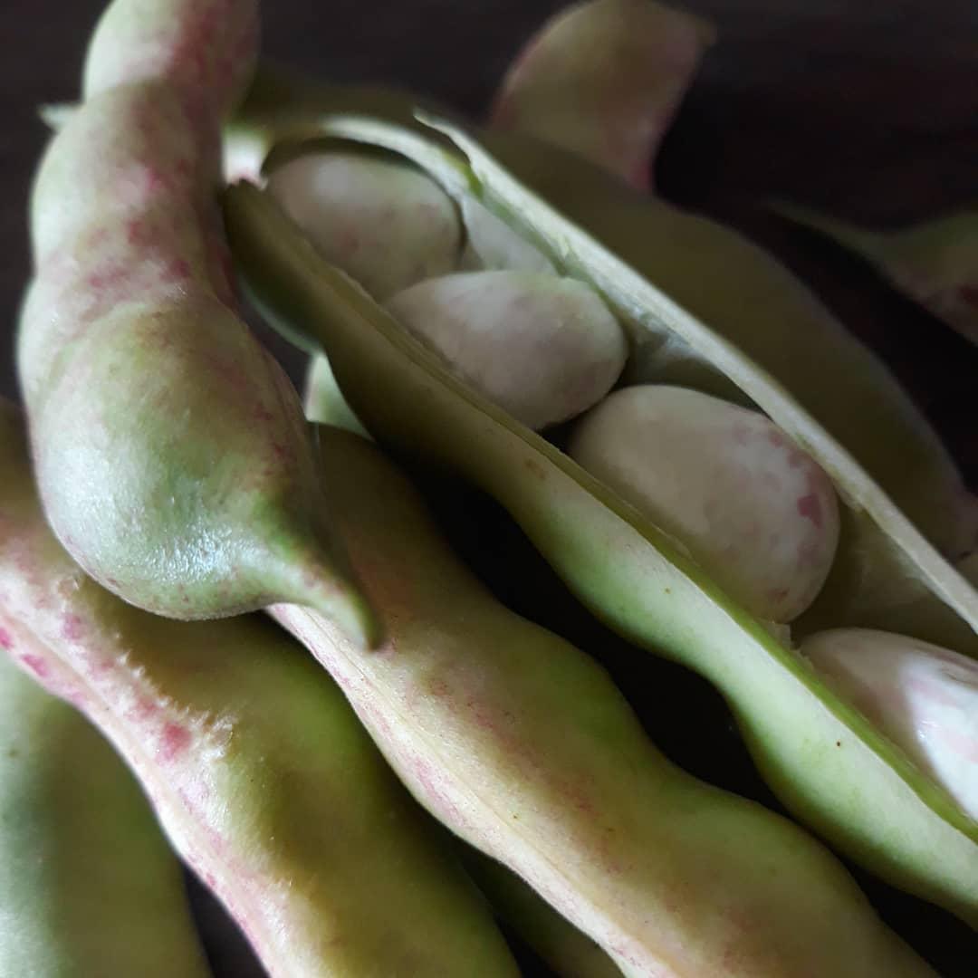 Italian Vegetable Garden | Casale Volpe